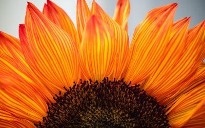Adopting a gratitude attitude in B2B telemarketing